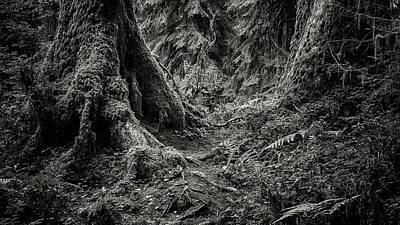Op Art Photograph - Into The Woods - Black And White by Stephen Stookey