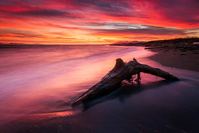 Driftwood Photograph - Iona Beach Sunset by Alexis Birkill