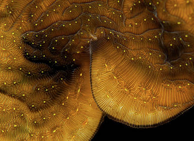 Iridescent Coral Print by Jean Noren
