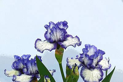 Iris 15 Print by Allen Beatty