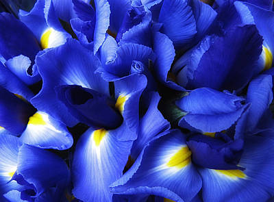 Irises Digital Art - Iris Abstract by Jessica Jenney