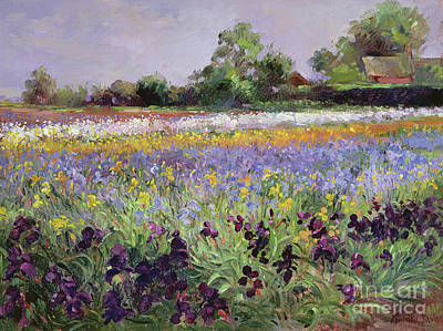 Iris Field And Two Cottages Print by Timothy Easton