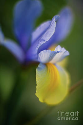 Light Blue Abstracts Photograph - Iris Grace by Mike Reid