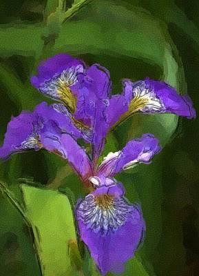Floral Photograph - Iris II by David Lane
