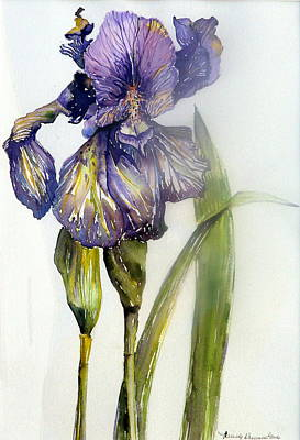 Irises Drawing - Iris In Bloom by Mindy Newman