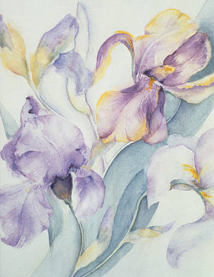 Irises Drawing - Iris by Karen Armitage