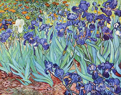 Pd Painting - Irises by Pg Reproductions
