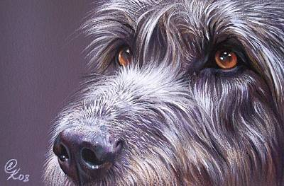 Dog Close-up Drawing - Irish Eyes by Elena Kolotusha