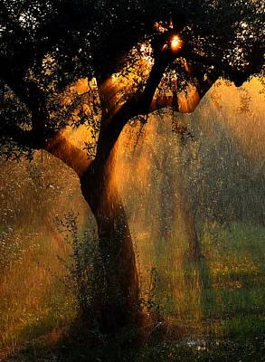 Irrigation Photograph - Irrigation by Stefano Castoldi