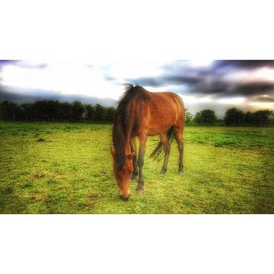 Horse Photograph - Isabellashores.com #horse #equine by Isabella Abbie Shores