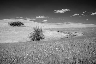 Designer Photograph - Isolation On The Plains by Jon Glaser