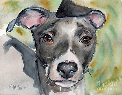 Puppy Dog Eyes Painting - Italian Greyhound Watercolor by Maria's Watercolor