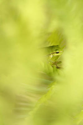 Tree Frog Photograph - It's Not Easy Being Green - Tree Frog Hiding  by Roeselien Raimond