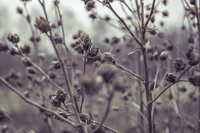 Field Digital Art - It's Winter by Thubakabra