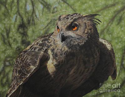 Owl Drawing - Ivan by Jennifer Watson