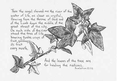 Revelation Drawing - Ivy Branch by Theresa Dansin