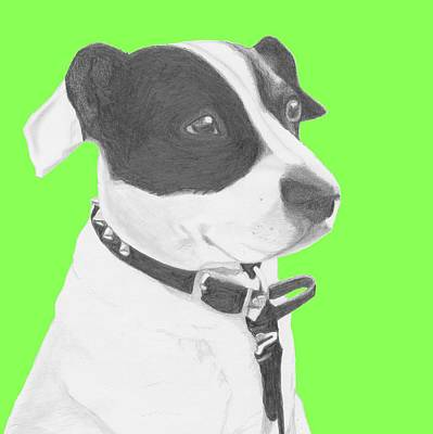 Jack Russell Drawing - Jack Russell Crossbreed In Green Headshot by David Smith