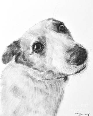 Jack Russell Terrier Drawing Print by Kate Sumners