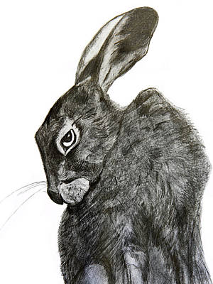 Rabbit Drawing - Jackrabbit Jock by Linde Townsend
