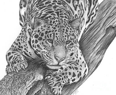 Rainforest Drawing - Jaguar by Bockes Fine Art