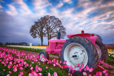 Pink Tulips Photograph - Jane Deere by Darren White