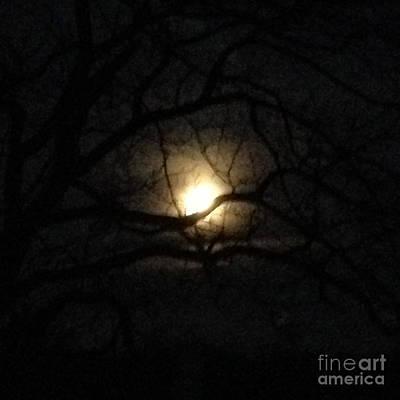 January 2016 Full Moon Through Walnut Tree Print by Conni Schaftenaar