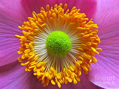 Sean Photograph - Japanese Anemone Close Up by Sean Griffin