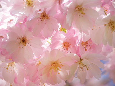 Japanese Cherry Blossom Beauty Print by Georgiana Romanovna