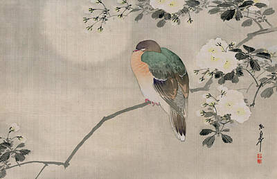 White Drawing - Japanese Silk Painting Of A Wood Pigeon by Japanese School