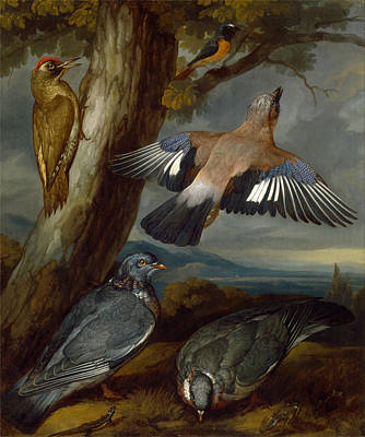 Francis Barlow Painting - Jay Green Woodpecker Pigeons And Redstart by Francis Barlow