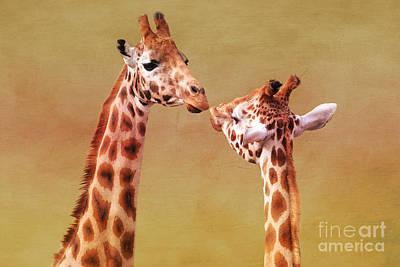 Giraffe Photograph - Je T'aime Giraffes by Terri Waters