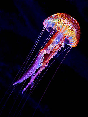 Jellyfish Photograph - Jellyen by Henry Jager