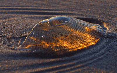 Jellyfish Photograph - Jellyfish Sunset #2 by Ryan Scholl