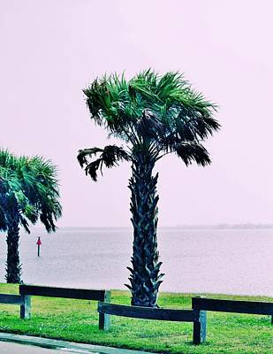 Jensen Causeway With Cross Processing Print by Don Youngclaus