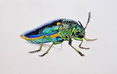 Beetle Drawing - Jewel Beetle by Biophilic Art