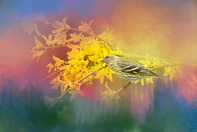 Siskin Photograph - Jewel In The Garden by Jai Johnson