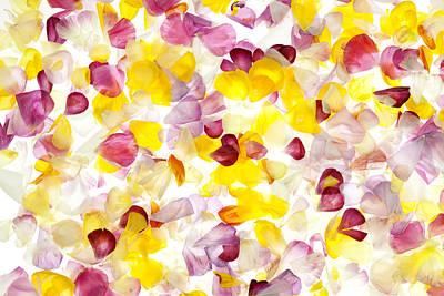 Jewel Like Petals Print by Brad Rickerby