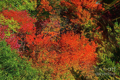 Photograph - Jnh Fall Abstract by Patti Whitten