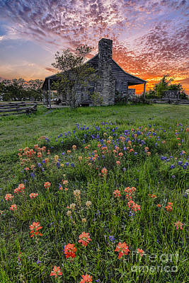 John P Coles Cabin And Spring Wildflowers At Independence - Old Baylor Park Brenham Texas Print by Silvio Ligutti