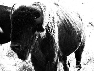 Bison Digital Art - Join The Party by Amanda Barcon