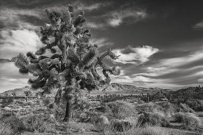 Joshua Tree Photograph - Joshua In Knots by Joseph Smith