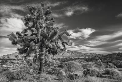Joshua Tree Photograph - Joshua In Knots by Joseph Smith