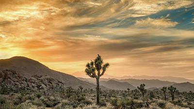 Joshua Tree Photograph - Joshua Tree Sunrise by Joseph Smith