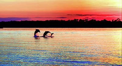 Dolphin Photograph - Joy Of The Dance by Karen Wiles