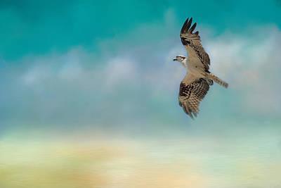 Osprey Photograph - Joyful Morning Flight - Osprey by Jai Johnson