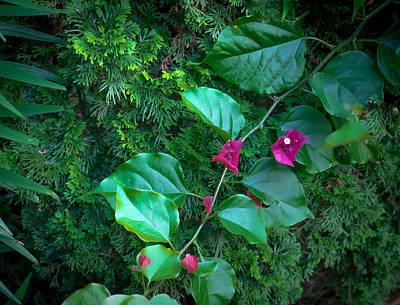 Juniper Flowers Original by Ches Black