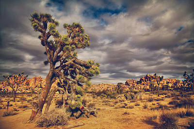 Joshua Tree Photograph - Just A Touch Of Madness by Laurie Search