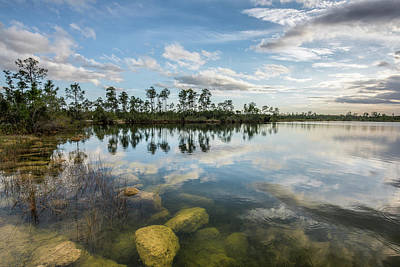 Just Below In The Everglades Print by Jon Glaser