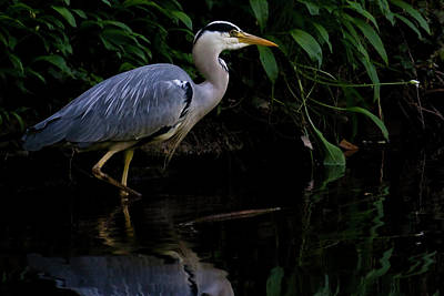Heron Photograph - Just Fishing by Brian Roscorla