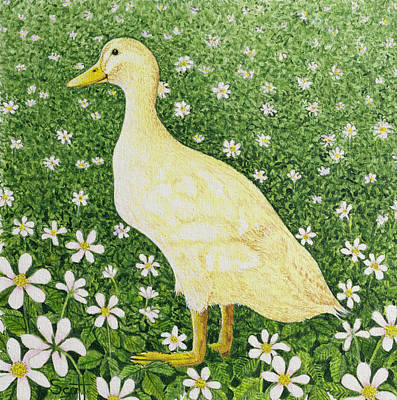 Daisies Drawing - Just Looking by Pat Scott